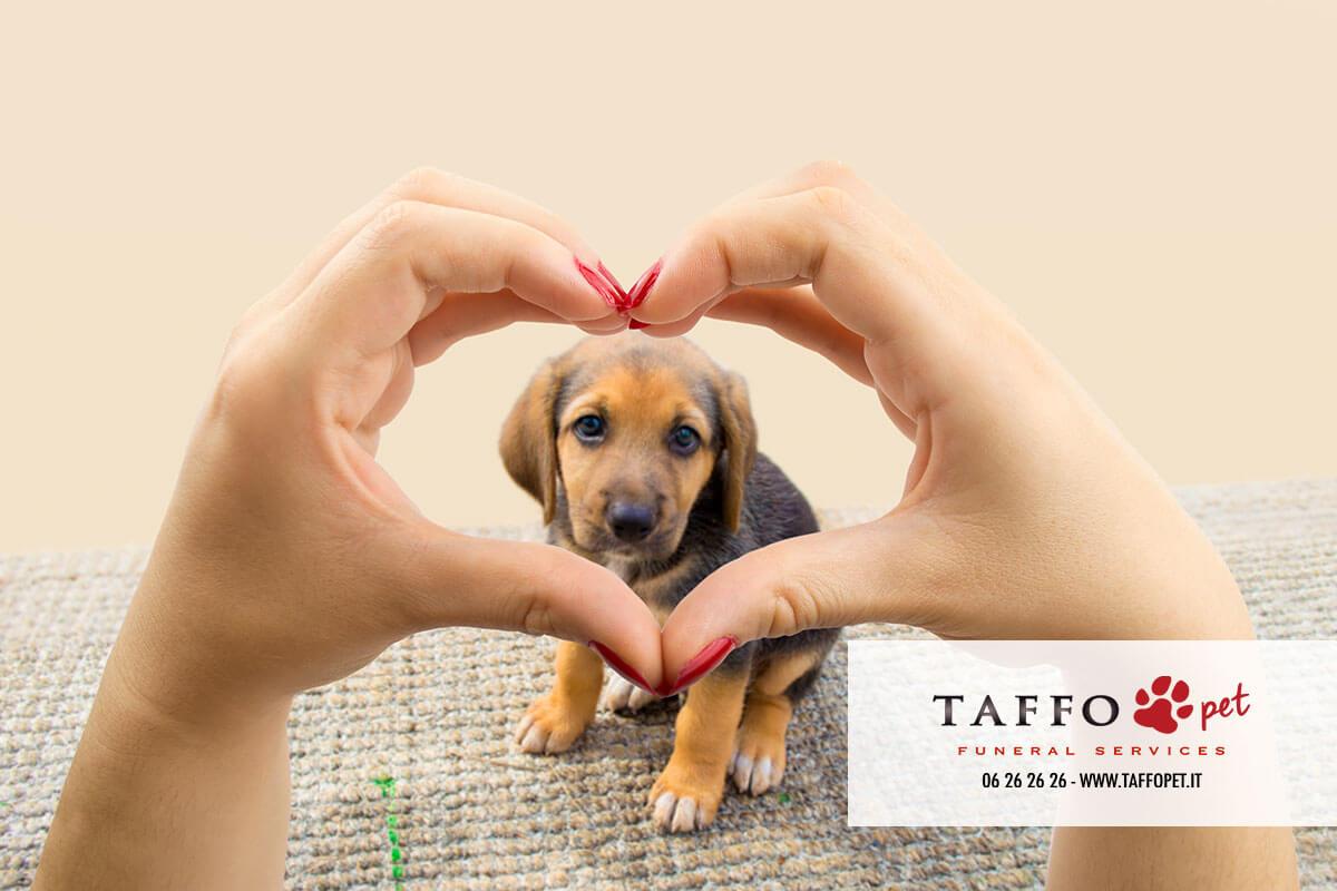 10 Frasi D Amore Per Cani